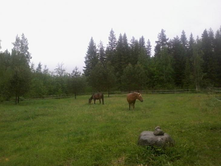 Year 2017. Life with the horses meant also allowing them free time on the pasture.