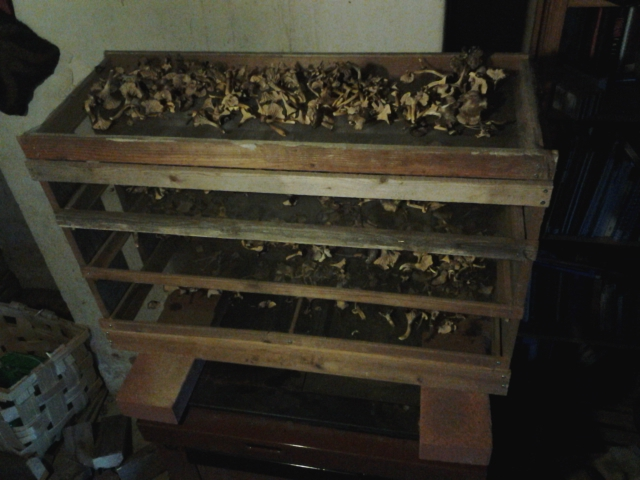 drying mushrooms on the stove