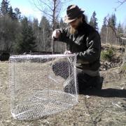 """Assembling a fish trap, """"katiska"""""""