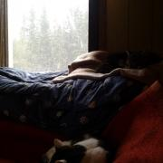 It is raining snow - no wonder the cats are just sleeping on the sofa.