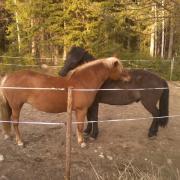 horse friendship