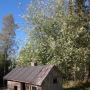 The bird cherry tree and the old sauna
