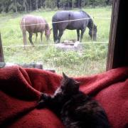 Animals on a rainy day