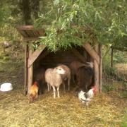 animals seeking shelter from rain