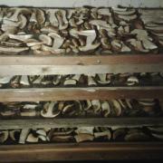 drying sliced boletus