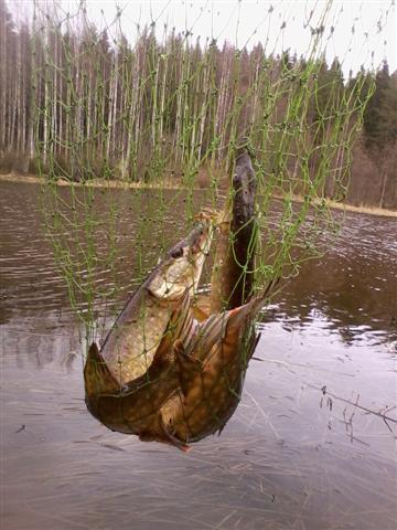 a triple catch