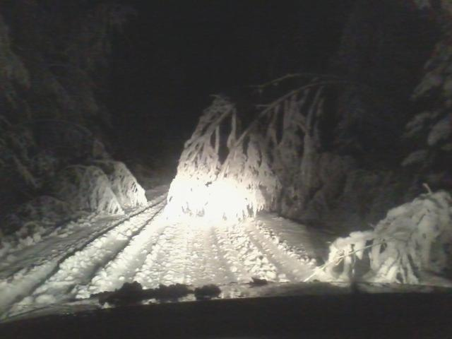 Snowy treetops in the middle of the road.