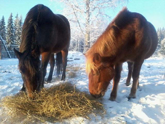 The horses enjoy sunlight