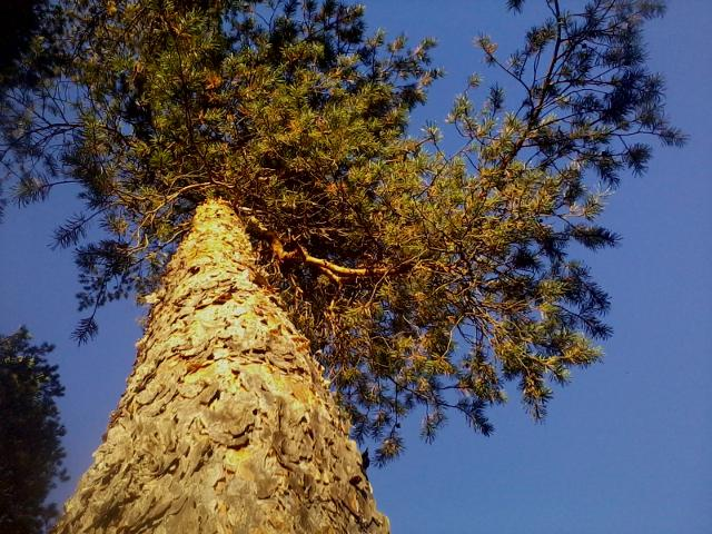 I also love the colors of the pine trees