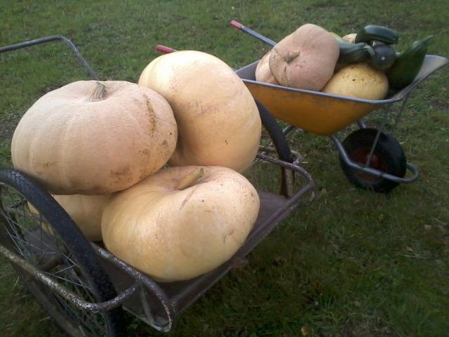 Pumpkins ...