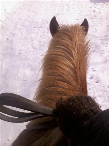 loose reins